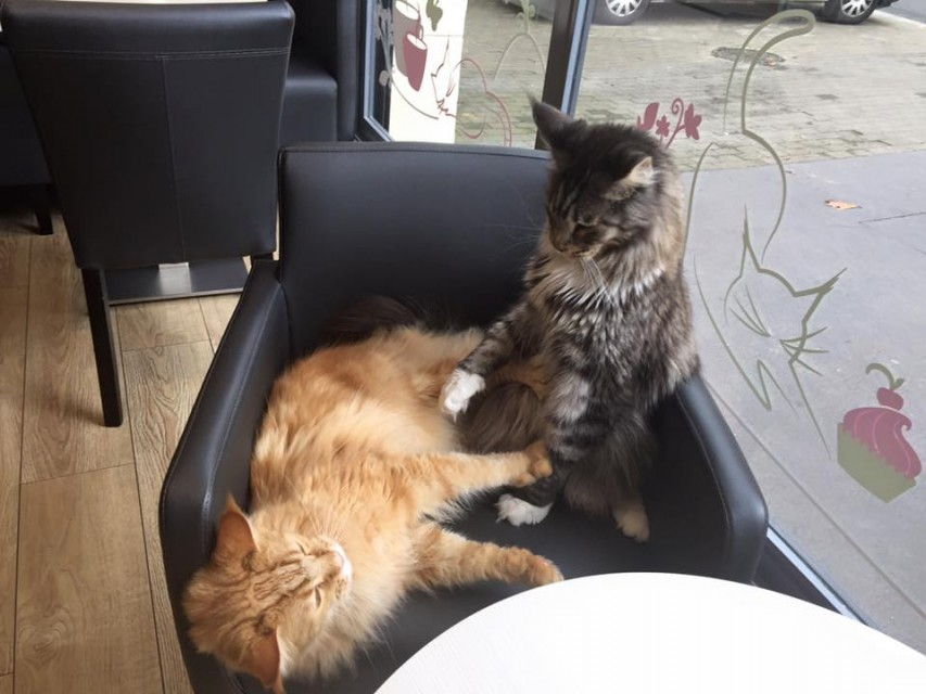 Bar à chats - Nantes